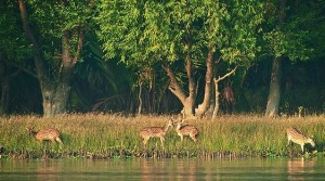 Sundarban-National-Park-Sajnekhali-Watch-Tower