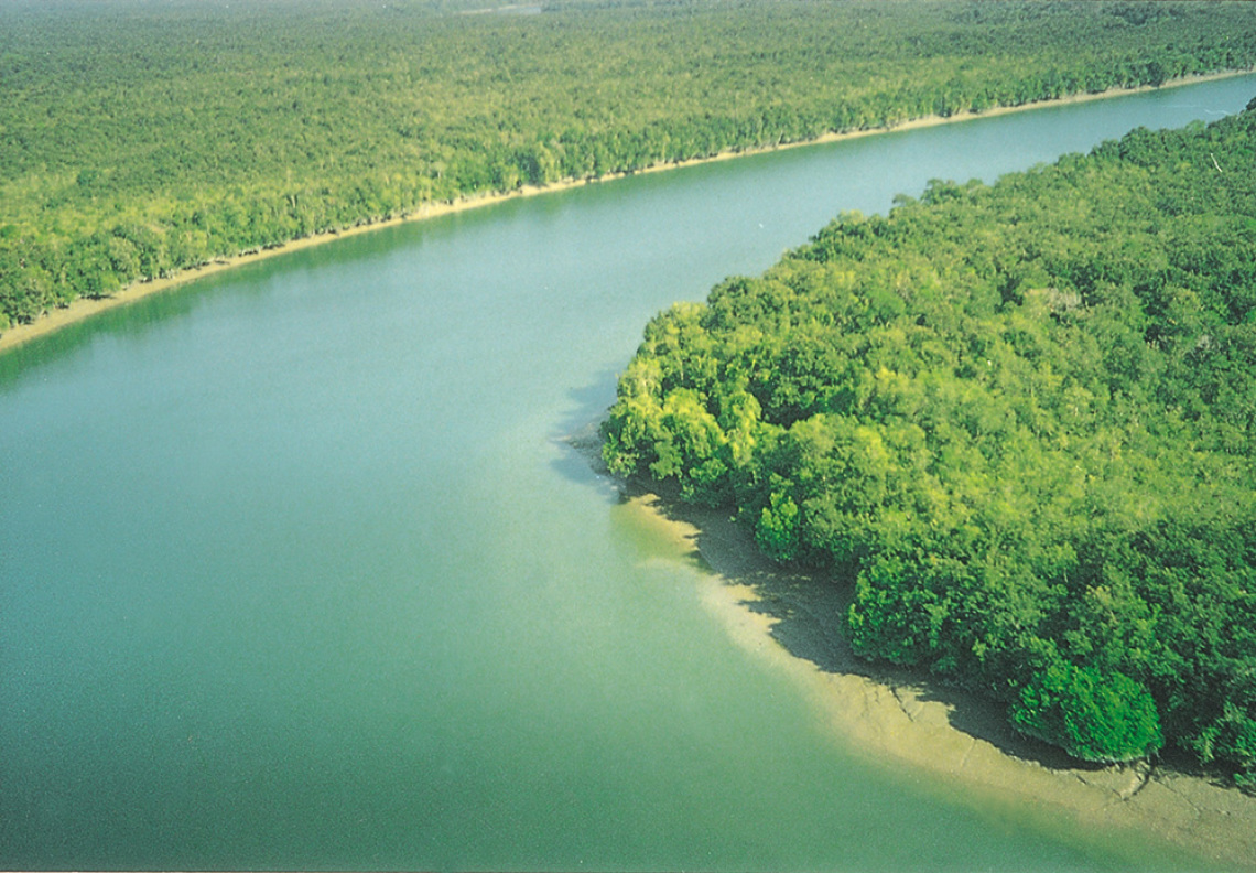 Sundarbans-the-largest-mangrove-forest
