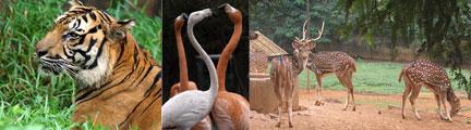 national-zoo