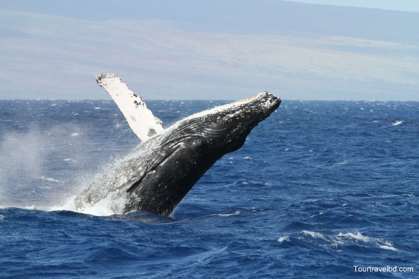 Whale-Watching-in-