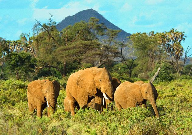 kenya-samburu-national-park